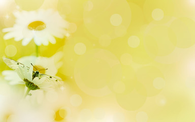 Floral background,chamomile  in the rays of light and butterfly.