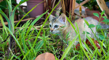 Small kitten walking in the garden. Young cat exploring summer meadow.