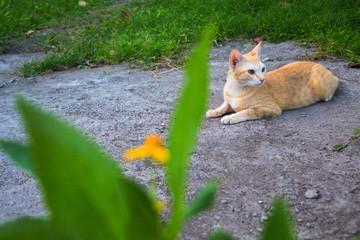 Red cat in the garden. Lovely ginger cat outside in summer garden.