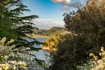 View of the forest and the mountain lake in the late afternoon at sunset through the blooming white bush.