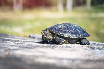 Turtle on green background on the stump. tropical animal forest. Blurred bokeh background