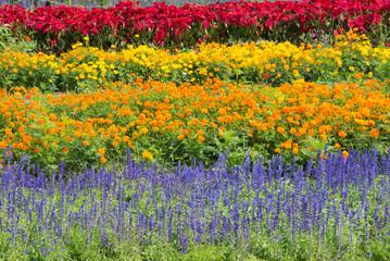 beautiful colorful flowers in garden
