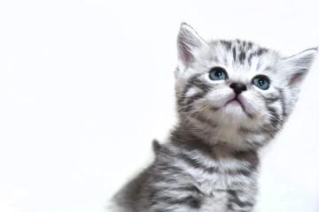Funny muzzle kitten. Portrait of a funny kitten
