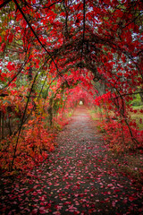 Recess Fitting Magenta tunnel alley of lovers in red