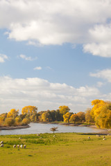 Autumn view of the Dutch river IJssel between Arnhem and Zutphen