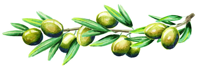 Olive branch horizontal title. Watercolor