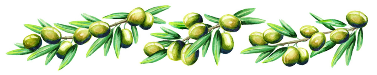 Olive branch horizontal. Watercolor
