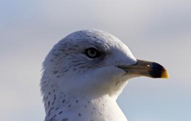 Amazing portrait of a cute beautiful gull