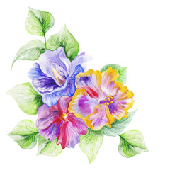 hibiscus in the summer garden. watercolor art.