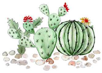 Cactus succulents illustration watercolor