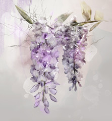Watercolor wisteria illustration