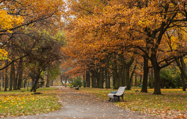 Empty bench on the alley side in autumn park. Catherinehof, Ekaterinhof park in Saint-Petersburg