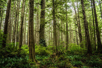 Forest in Ozette at Olympic National Park