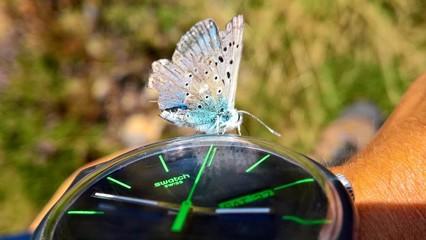Papillon posé sur montre swatch