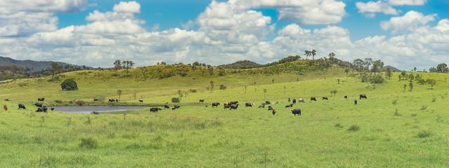 Panoramic Australian Rural Landscape