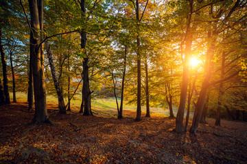Majestic autumn landscape
