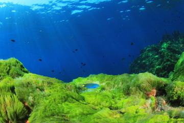 Green algae on underwater rocks in ocean