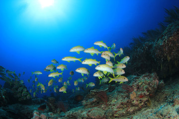 School of fish on coral reef underwater