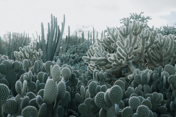 Foto op Plexiglas Cactus Cactus Garden