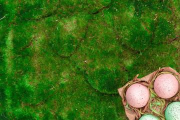 Easter spring eggs on green moss in cardboard punnet