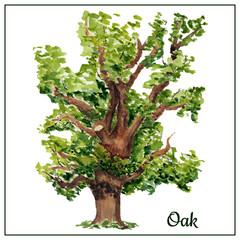 Watercolor oak card