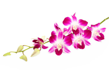 Beautiful orchids isolated on white background
