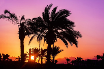 silhouette of palm trees, mosque at sunset