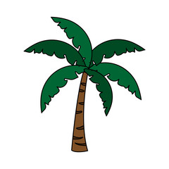 palm tree icon image vector illustration design