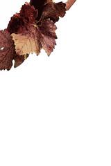 Panneau feuilles de vigne