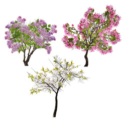 collection of three blossoming trees isolated on white