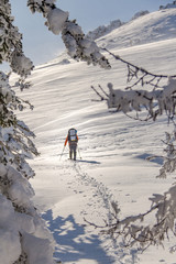 Man Traveler with backpack hiking or skitouring in winter forest landscape into the wild
