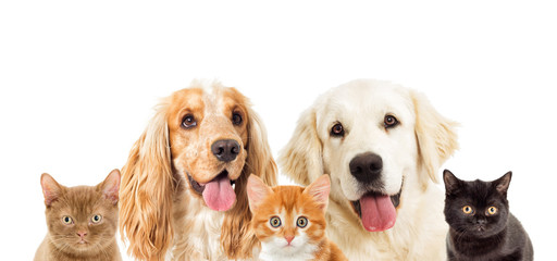 portrait dogs and kitten