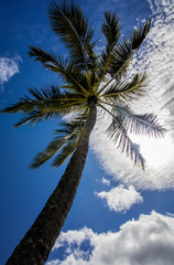 Wall Mural - palm tree and blue sky