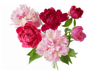 Beautiful peony flowers bunch  isolated on white