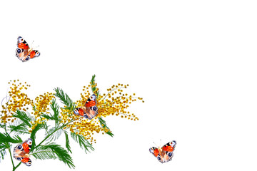 flowers mimosa and butterflies