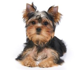 One cute puppy