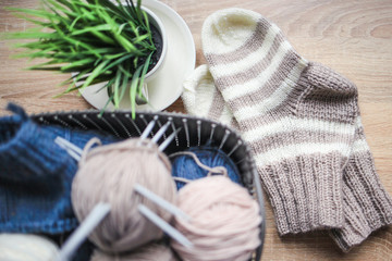 Striped beige-white knitted socks and a green plant in the pot. Wooden background. Knitting hobby