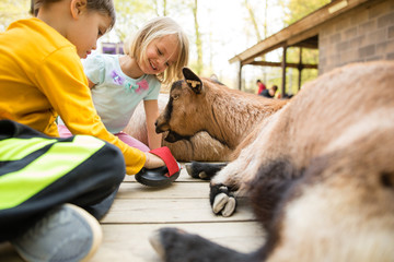 Children grooming goat at petting zoo