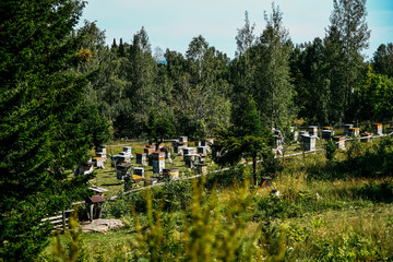 Uliy house of bees, honeycomb, buzzing, frames, apiary
