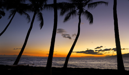 Palm trees silhouette against sunset on Maui, Hawaii