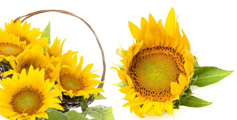 sunflowers in a wooden basket