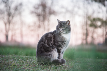 cat sitting on lawn at dusk
