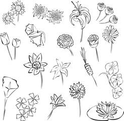 flores.fla