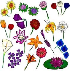 flores.fla*