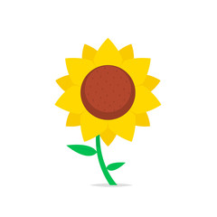 Sunflower isolated vector