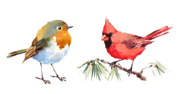Northern Cardinal and Robin Two Birds Watercolor Hand Painted Illustration Set isolated on white background