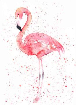 Watercolor flamingo with splash. Painting image