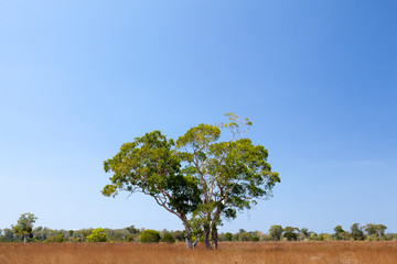 Savanna meadow