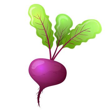 Colorful cartoon style beet