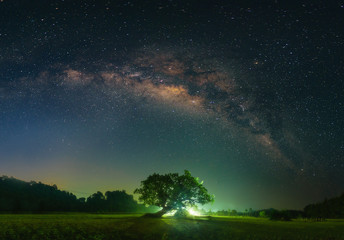 Beautiful tree and light under milky way